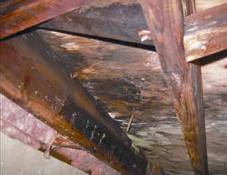 mold and rot in a Rochester crawl space